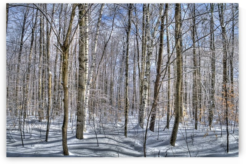 Tranquillity -Winter in Vermont 186  by Matthew Lerman