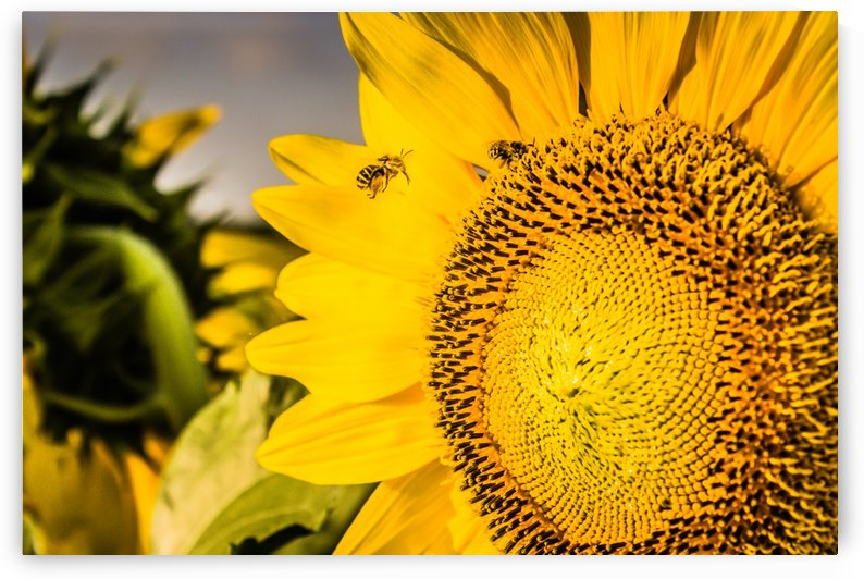 Busy Bee Day by lisa smith