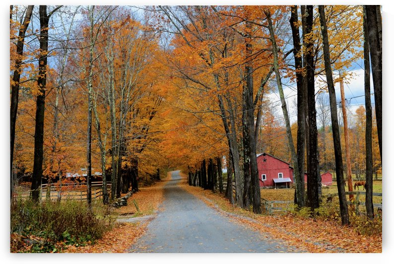 Autumn Three Maple Dr. Manchester VT by Matthew Lerman