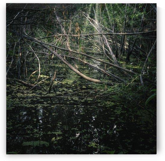Létang 2 by Daniel Thibault artiste-photographe
