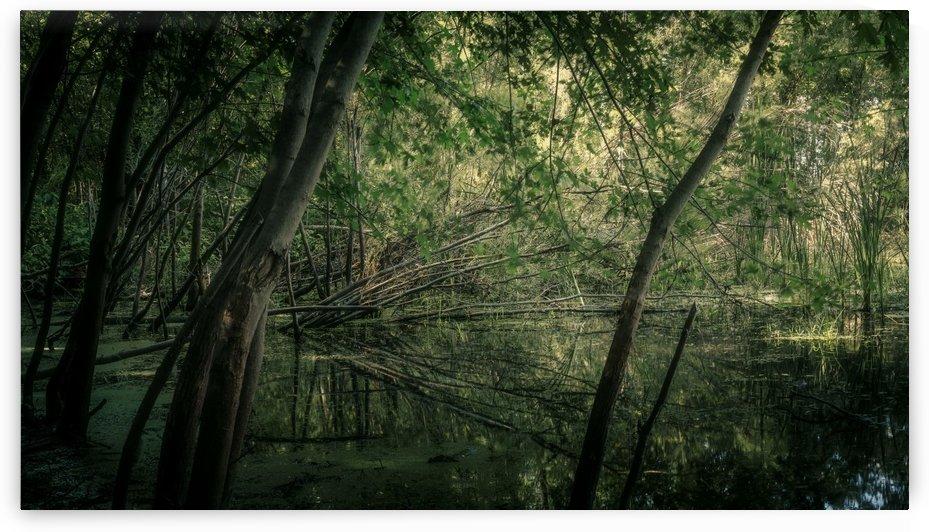 Létang 1 by Daniel Thibault artiste-photographe