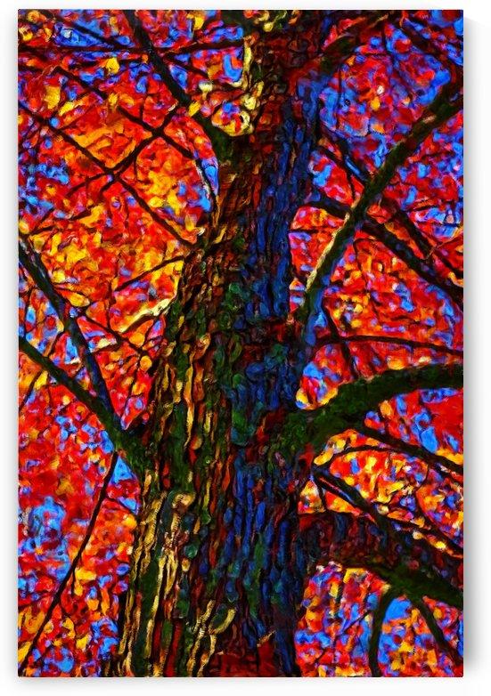 Red & Orange by George Bloise