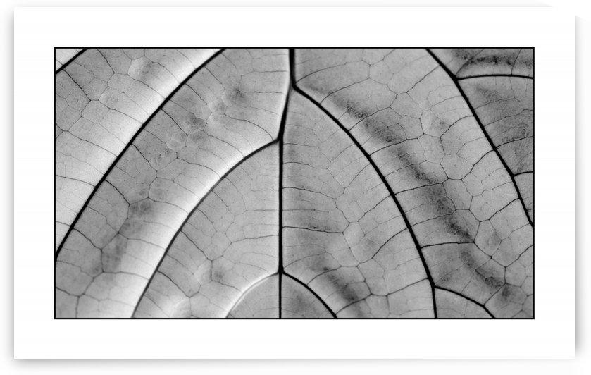 Skeleton Leaf  by George Bloise