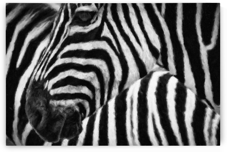 Zebras by George Bloise