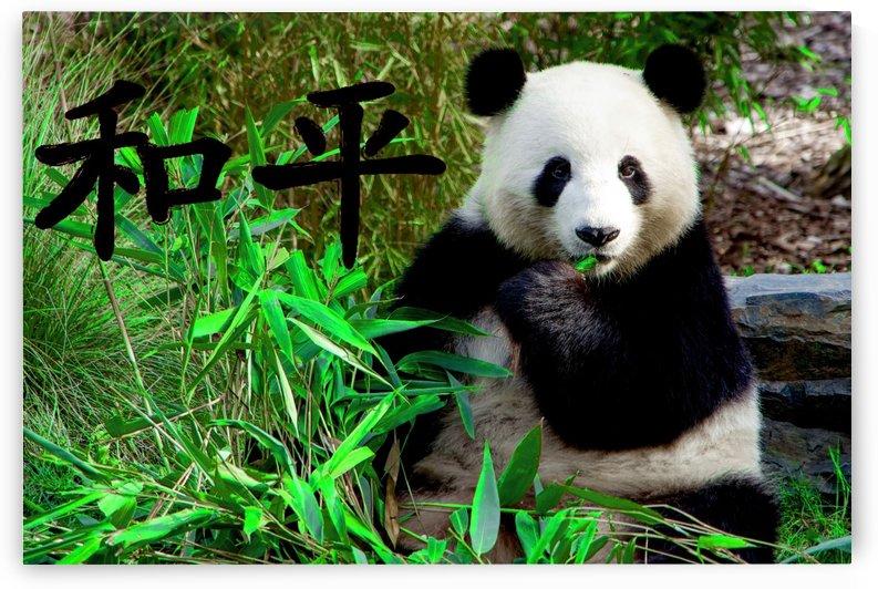 Panda bear by girouArd
