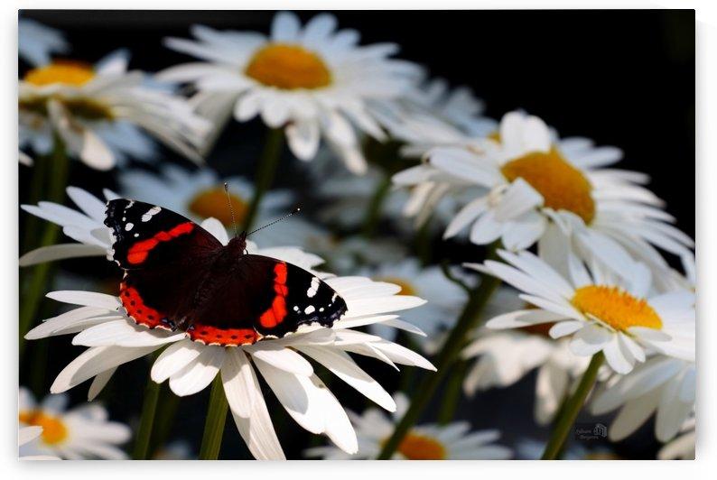 Floral artistique 2 by Sylvain Bergeron Photographies
