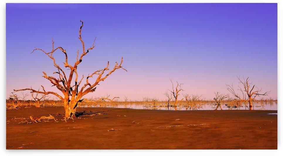 Sunrise on Pamamaroo Lake by Lexa Harpell