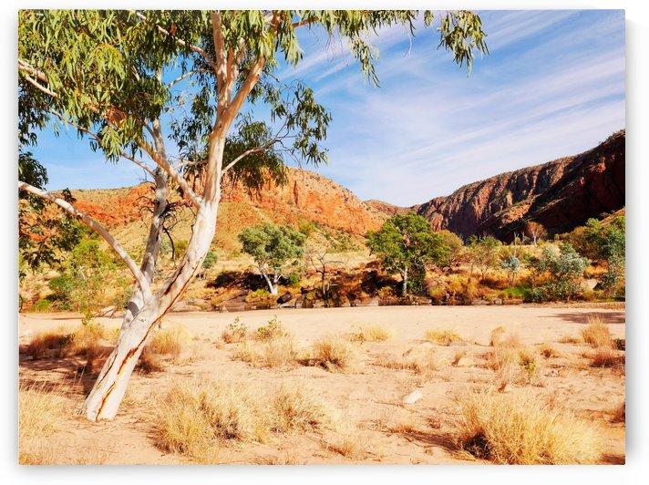 Ghost Gum  - Central Australia 3 by Lexa Harpell