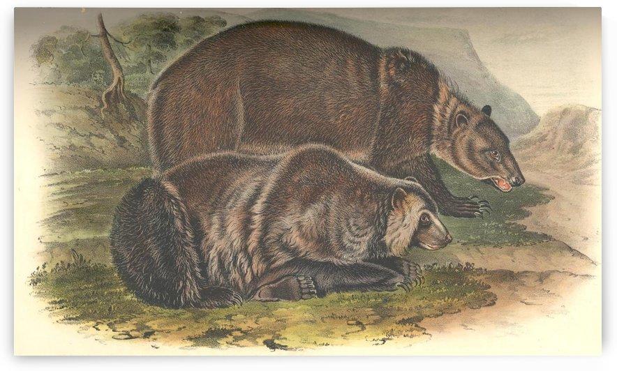 Grizzly Bears by John James Audubon