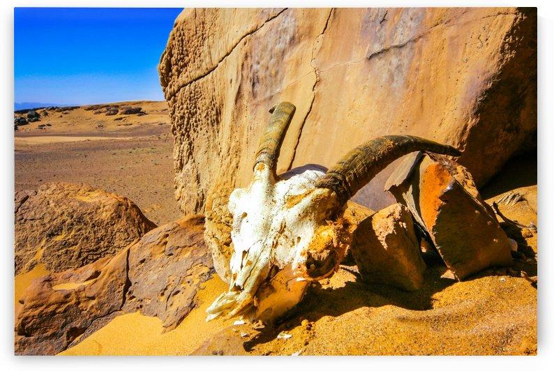 Gazelle by agencetourdumonde com