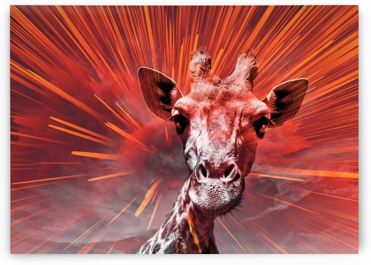 Giraffe pop 6  by Thula-Photography
