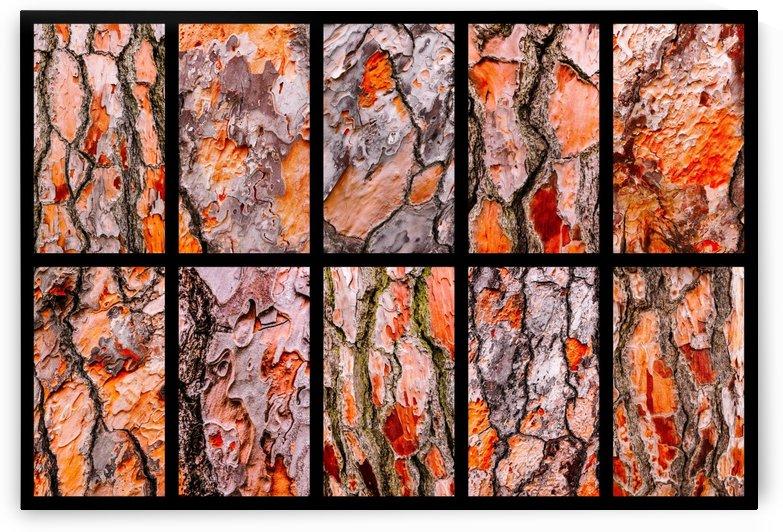 Pine Tree Bark Montage by Lexa Harpell