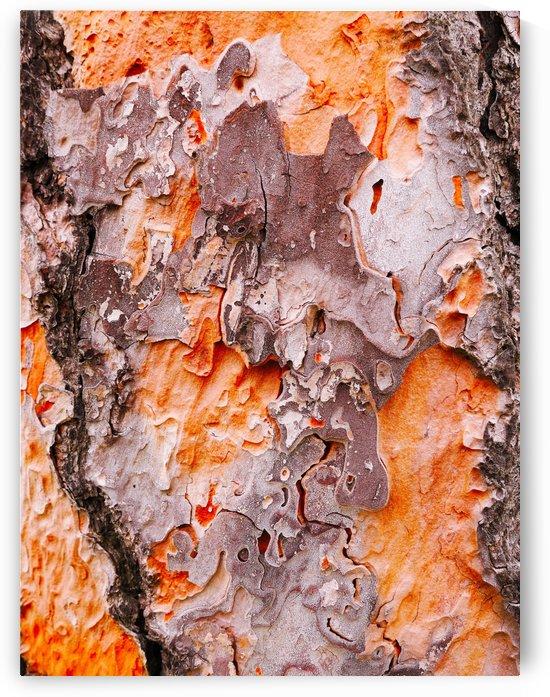 Pine Tree Bark by Lexa Harpell