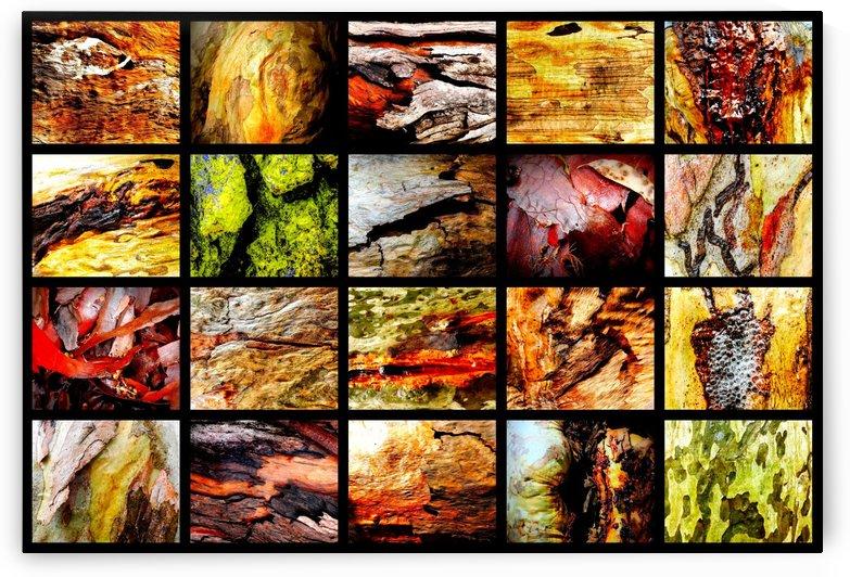 Wet Tree Bark Montage by Lexa Harpell