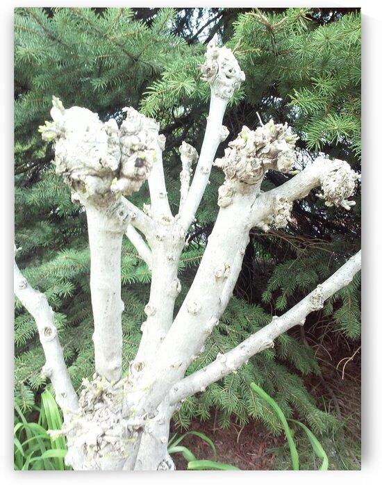 Long Term Mushroom. by Michelle Ramos