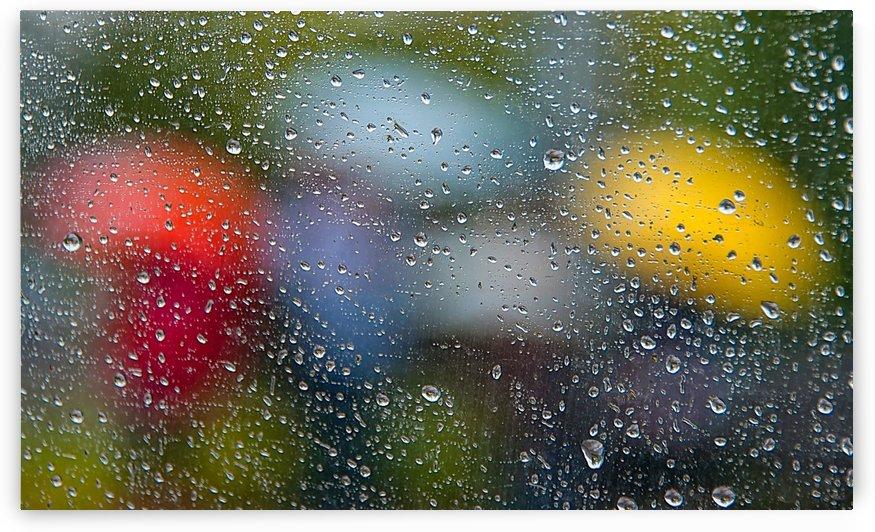 Summer Rain by Lily Markovic