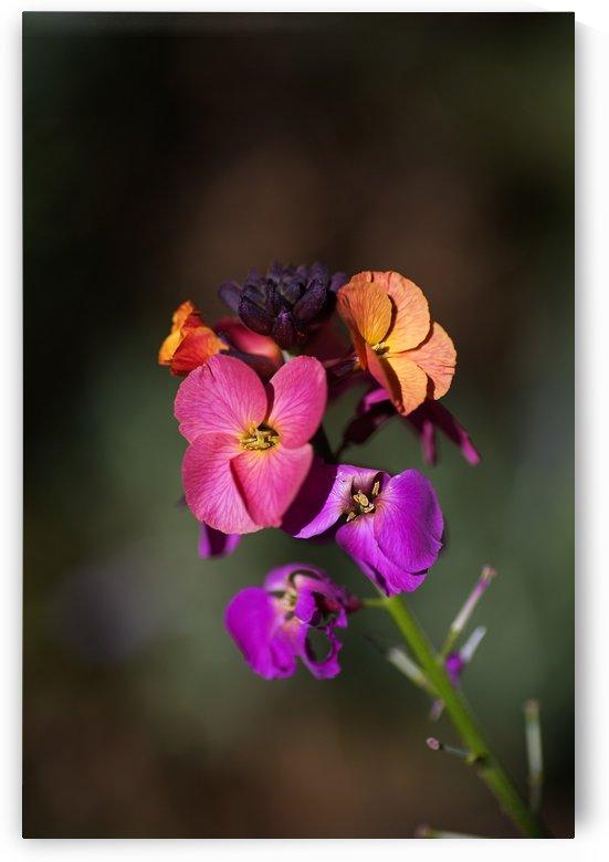 Wallflower by Joy Watson