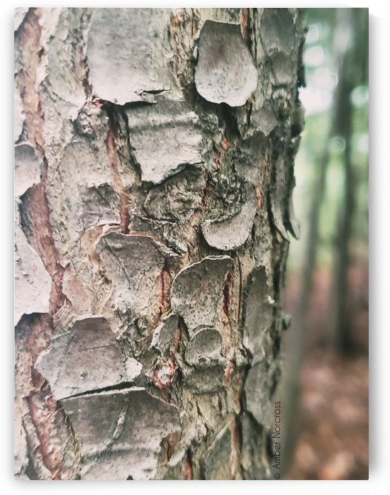 Bark by Amber Norcross
