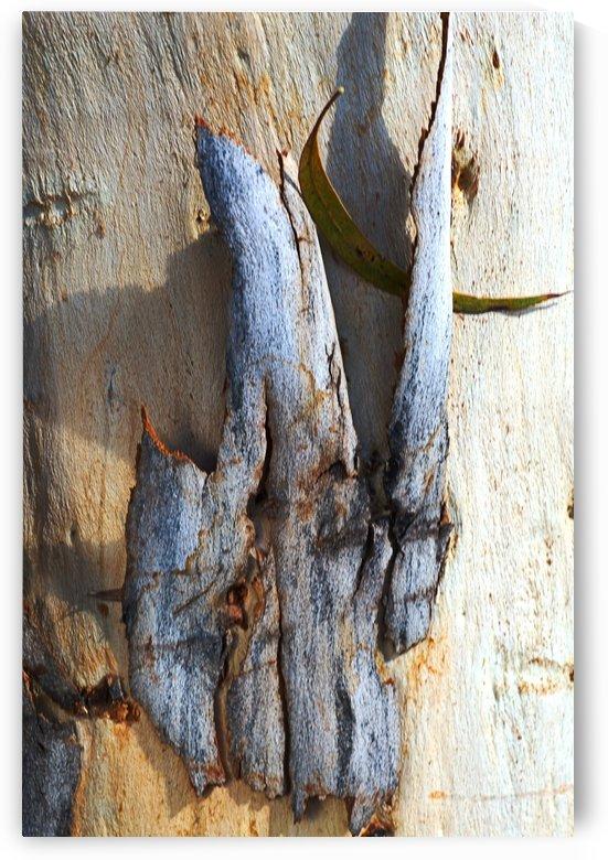 Texture Of Eucalyptus Bark by Joy Watson