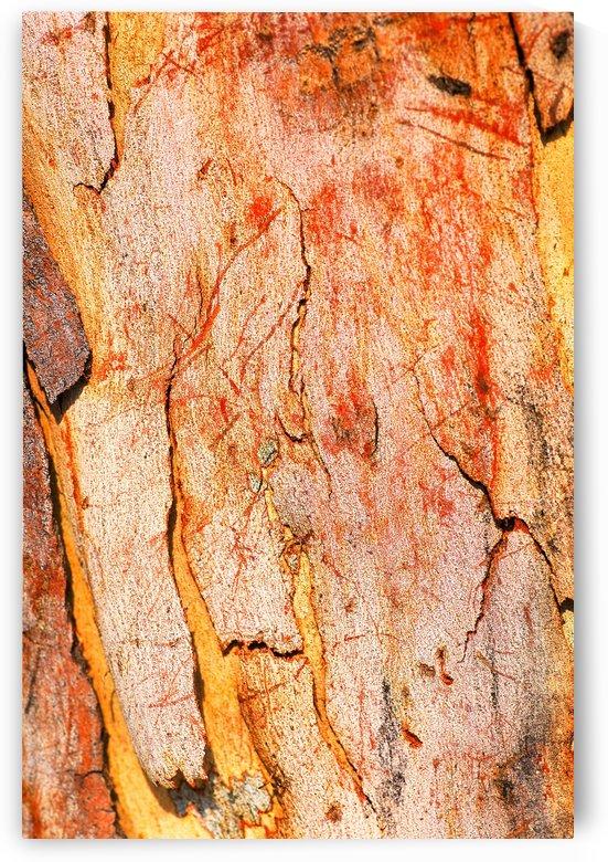 Eucalyptus Bark And Patterns by Joy Watson