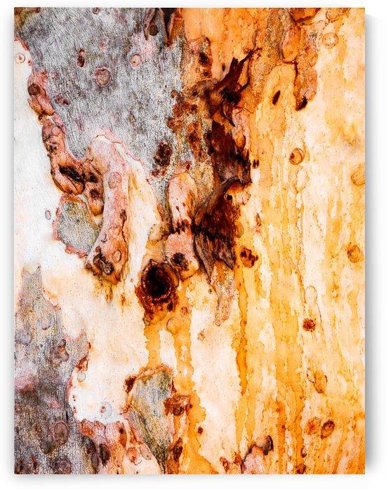 Ghost Gum Bark - 4 by Lexa Harpell