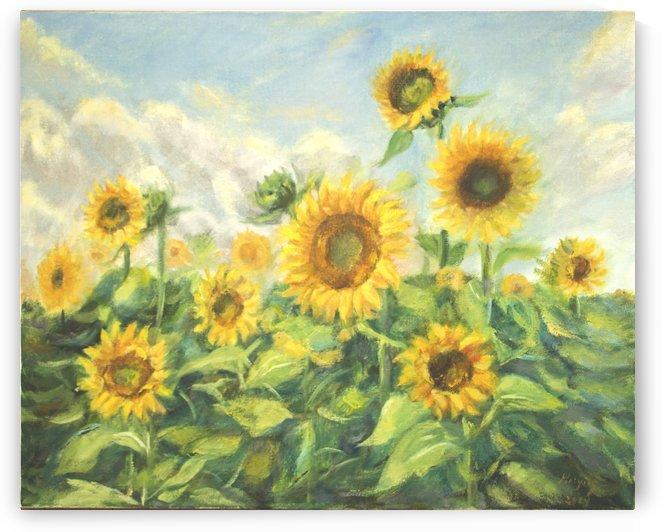 Sunflowers in the field by YongeArtStudio