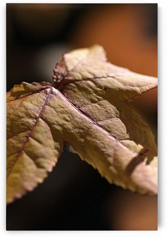 leaf Textures by Joy Watson