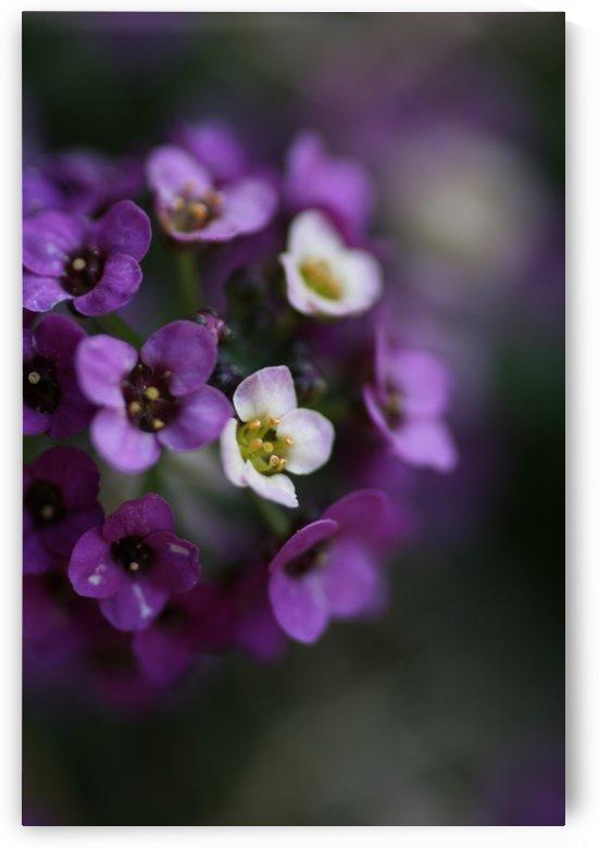 Flower Ball Allysium Flowers by Joy Watson