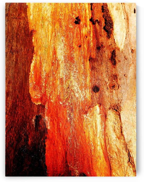 Murray Gum Tree Bark 2 by Lexa Harpell