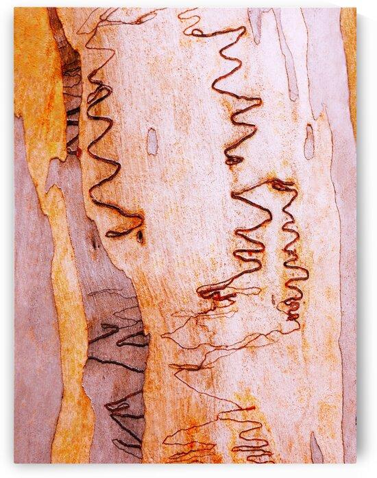 Scribbly Gum Tree Bark 2 by Lexa Harpell