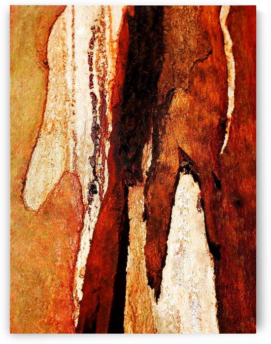 Murray Gum Tree Bark 8 by Lexa Harpell