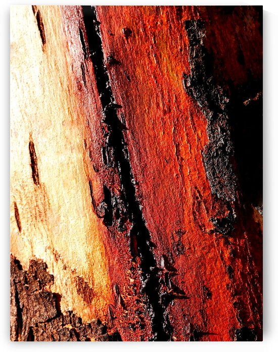 Murray Gum Tree Bark 11 by Lexa Harpell