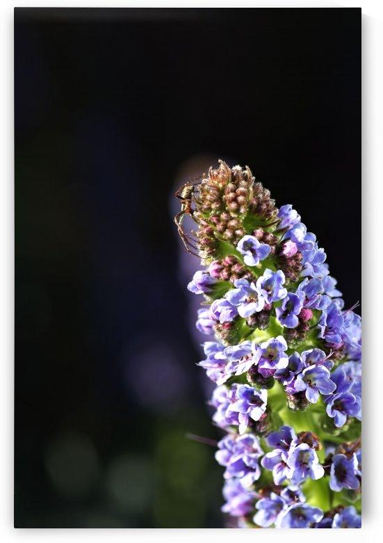 Veronica Flower Delight by Joy Watson