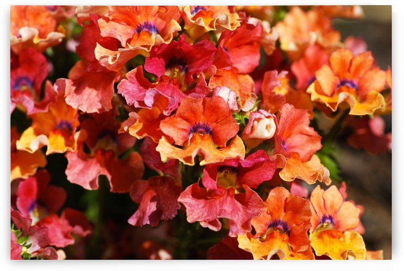 Orange Flower Display by Joy Watson