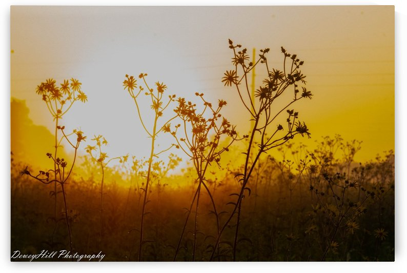 flowers warming up by DeweyHill Photography