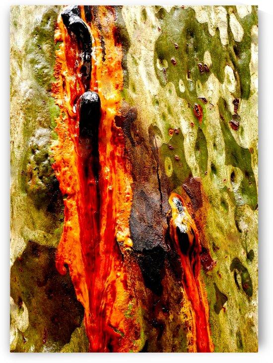 Aussie Gum Tree Bark - 11 by Lexa Harpell