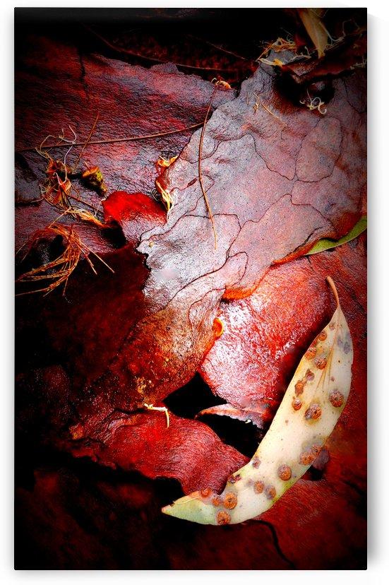 Aussie Gum Tree Bark - 10 by Lexa Harpell
