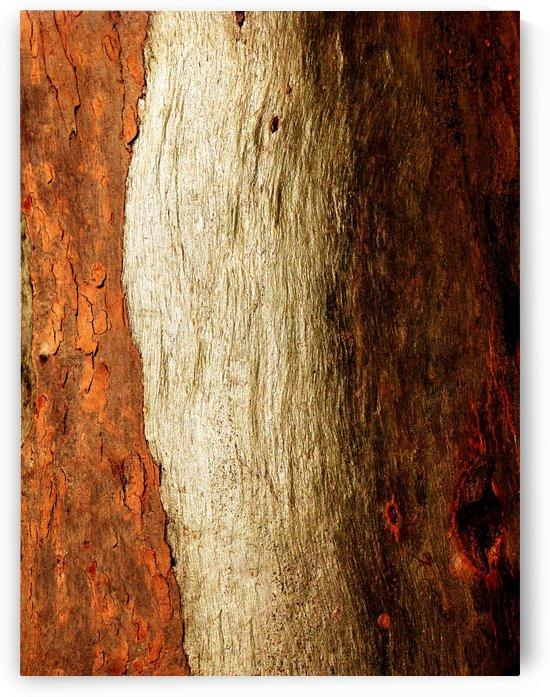 Murray Gum Tree Bark 17 by Lexa Harpell