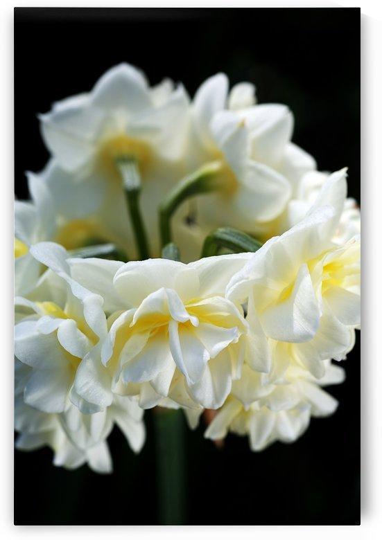 Jonquil Flower Ring by Joy Watson