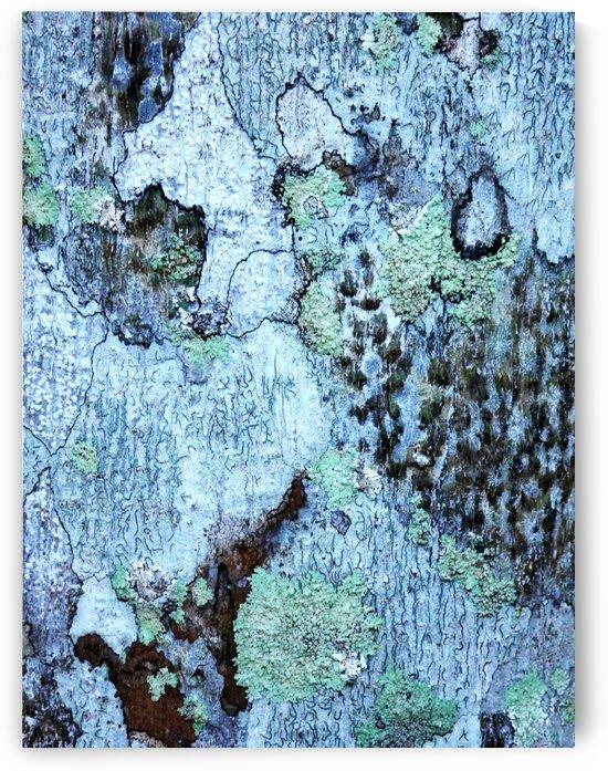 Aussie Gum Tree Bark - 12 by Lexa Harpell