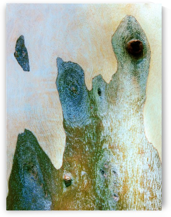Aussie Gum Tree Bark - 14 by Lexa Harpell