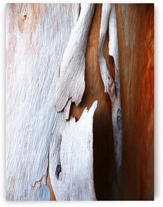 Salmon Gum Tree Bark 5 by Lexa Harpell