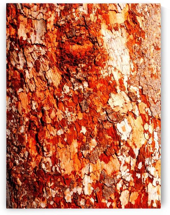 Aussie Gum Tree Bark - 15 by Lexa Harpell