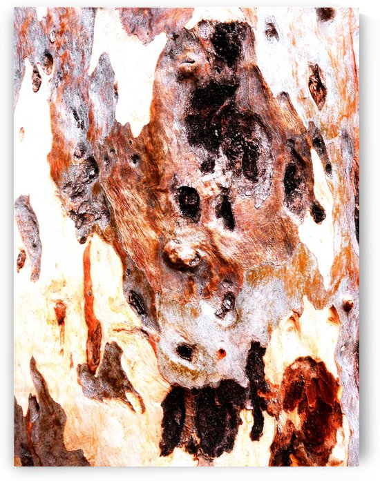 Aussie Gum Tree Bark - 17 by Lexa Harpell