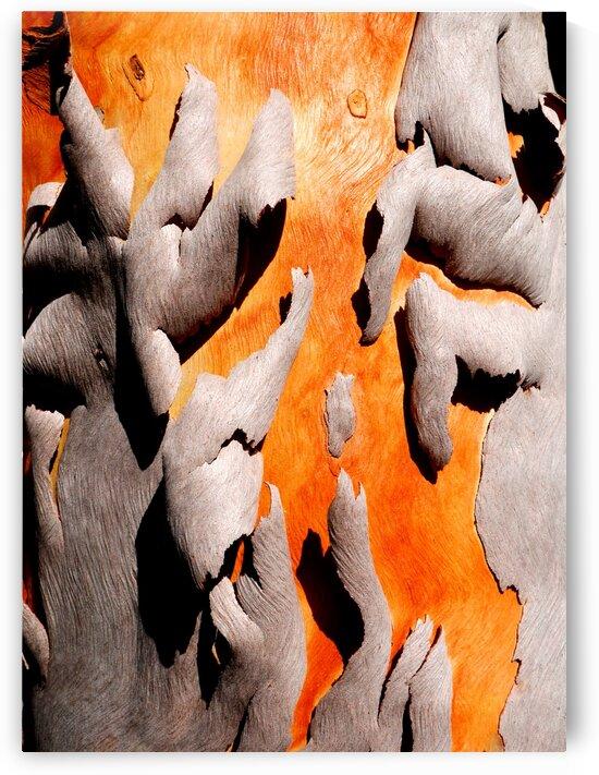 Salmon Gum Tree Bark 6 by Lexa Harpell