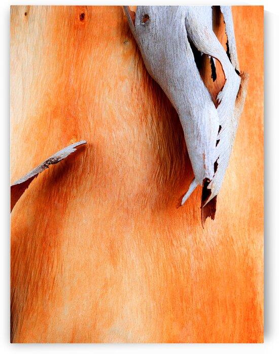 Salmon Gum Tree Bark 7 by Lexa Harpell