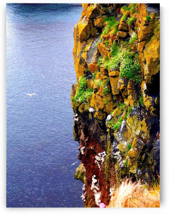 Ballintoy Cliff - Northern Ireland by Lexa Harpell