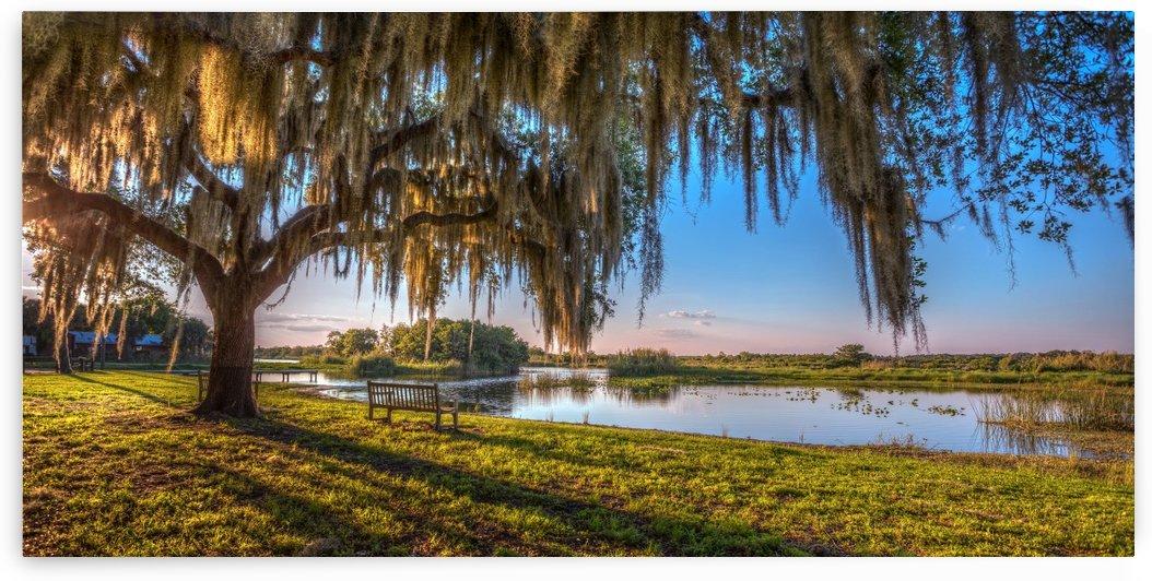 FLORIDA LAKE by George Bloise