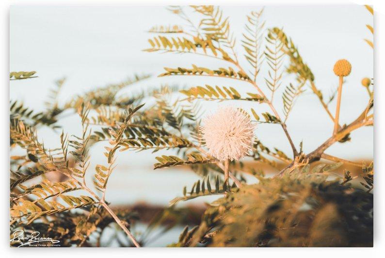 Bloom by Ryan Rozano