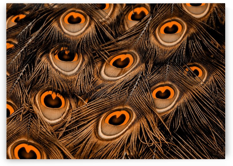 Peacock Feather black orange by Thula-Photography